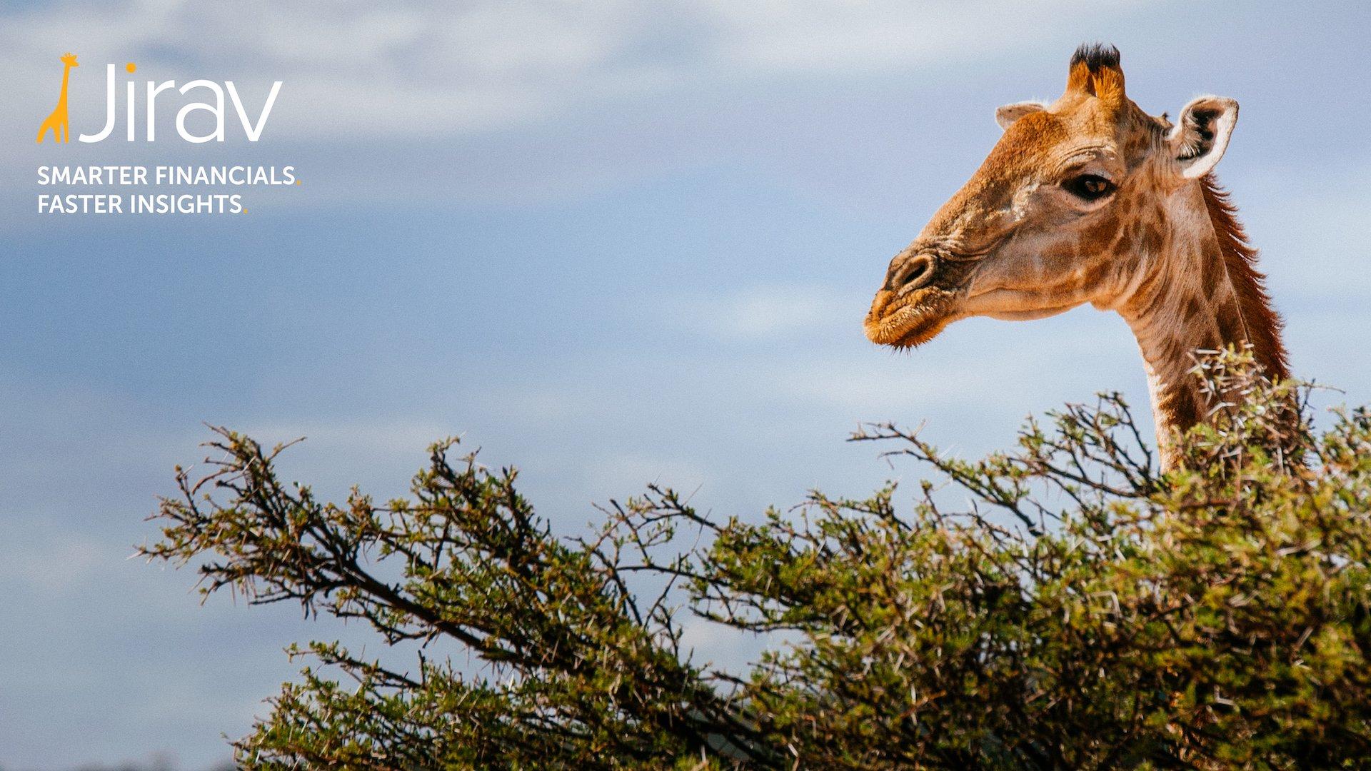 jirav giraffe
